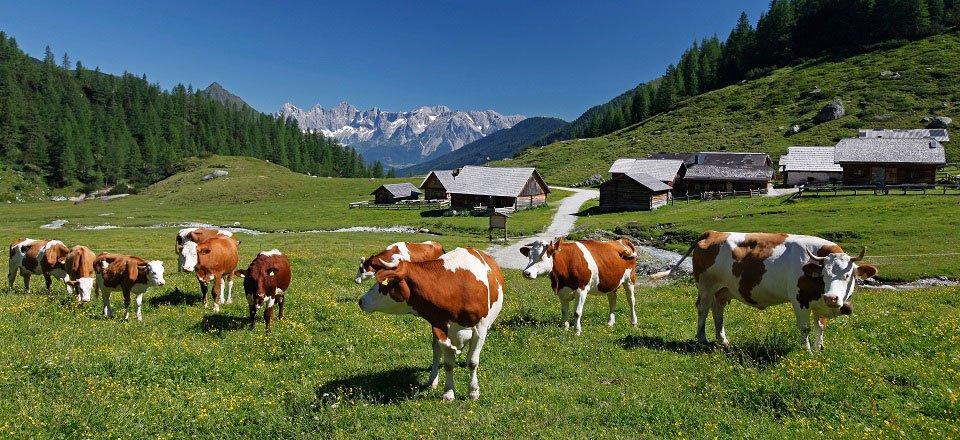 schladming steiermark oostenrijk (6)