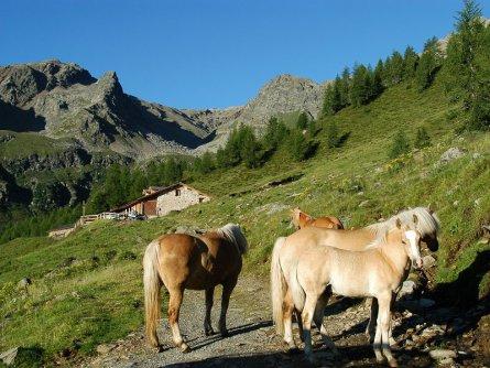 huttentocht val di sole dolomieten vakantie italiaanse alpen italie wandelen (12)