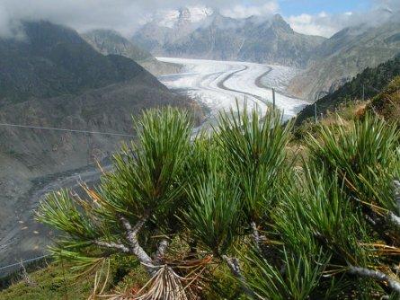 actieve vakantie gletsjertrekkings aletsch gletsjer trekking vakantie zwitserland (9)