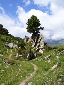 actieve vakantie gletsjertrekkings aletsch gletsjer trekking vakantie zwitserland (26)