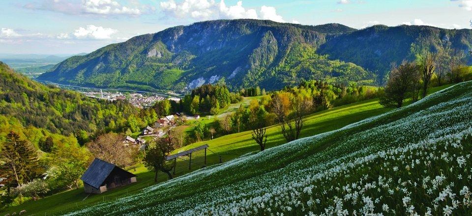 gehele juliana trail actieve vakantie meerdaagse wandeltocht julische alpen slovenië narcisne poljane nad jesenicami (1)