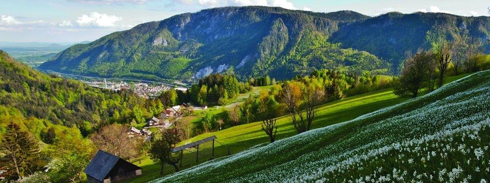 gehele juliana trail actieve vakantie meerdaagse wandeltocht julische alpen slovenië narcisne poljane nad jesenicami (2)