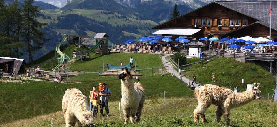 lamatrektochten gstaad berner oberland zwitserland tourismus gstaad