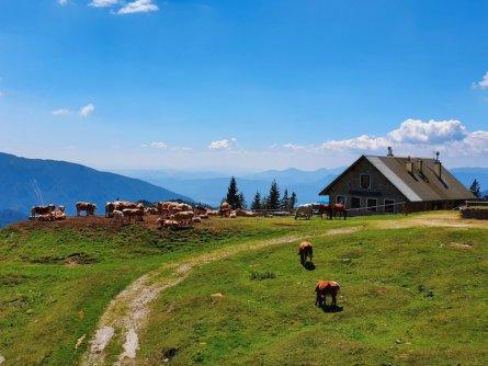 family active bled actieve gezinsvakantie slovenie julische alpen mini huttentocht šija scouts hut karawanken