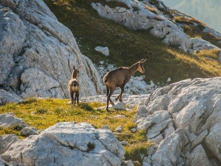 huttentocht julische alpen slovenie wandelen 16