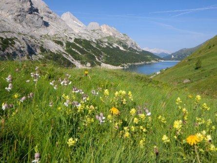 huttentocht dolomieten panorama val di fassa zuid tirol italie italiaanse alpen wandelvakantie apt val di fassa_nicola angeli_passo fedaia