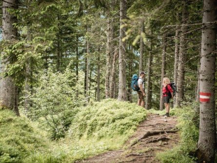 huttentocht gesause national park runde huttenrunde etappe 2 auf dem weg nach johnsbach